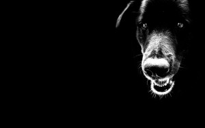 Black Dog Wallpaper HD