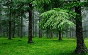 Green Forest Wallpaper Nature