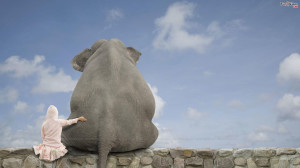 Elephant And Girl Friendship Funny Wallpaper