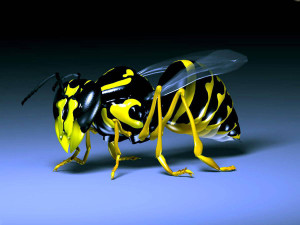 Yellow Bee 3D Wallpaper HD
