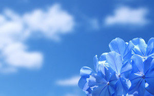 Sky Blue Flowers Wallpaper