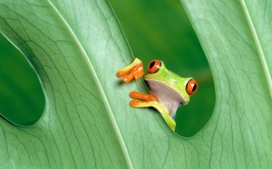 Frog Cute Photography Wallpaper